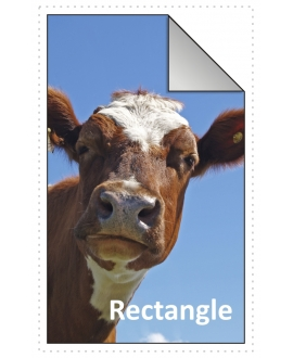 150x75mm Rectangle Stickers Qty 50